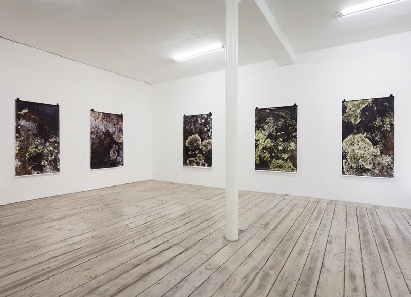 Ingeborg Luescher 300 MILLION YEARS Exhibition View 1