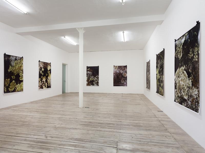 Ingeborg Luescher 300 MILLION YEARS Exhibition View 2